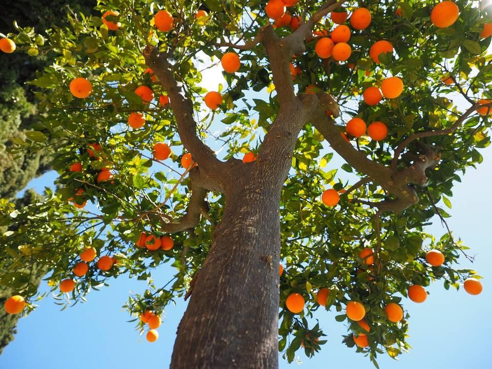 Когда есть фрукты