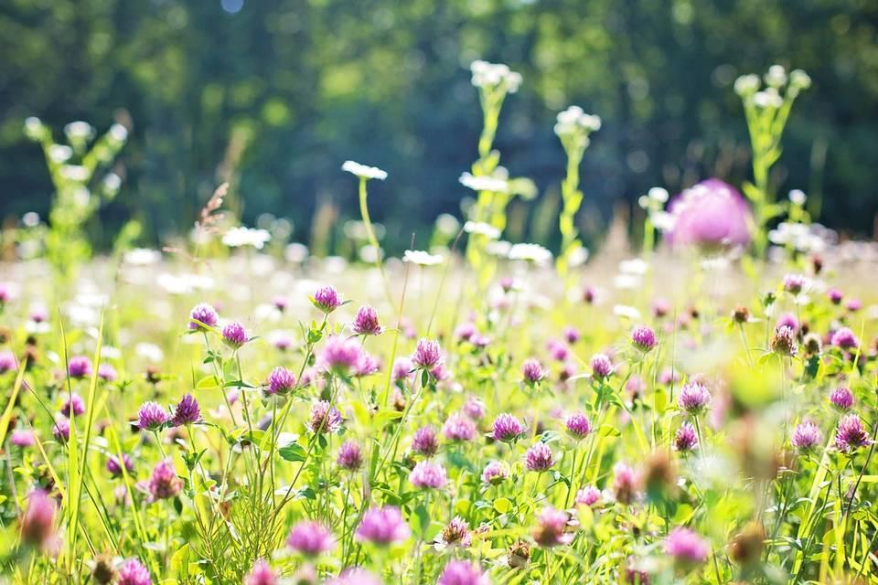 травы луг