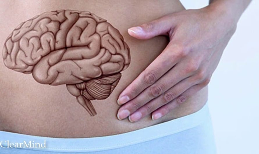 Второй мозг в кишечнике